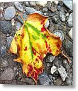 Vermont Foliage - Leaf On Earth Metal Print by Elijah Brook