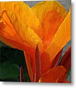 Vibrant Canna Metal Print by Susan Herber