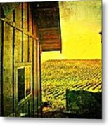 Vineyard Reflection Metal Print by Kevin Moore