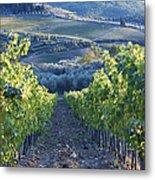 Vineyards Metal Print by Jeremy Woodhouse