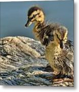 Waiting For Momma Metal Print by Cindy Fullwiler