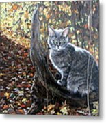 Waiting In The Woods Metal Print by Sandra Chase