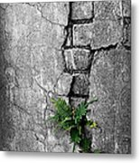 Wall Ferns Metal Print by Perry Webster