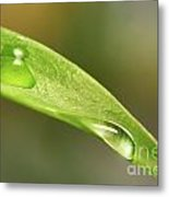 Water Droplets On A Lily Leaf Metal Print by Sandra Cunningham