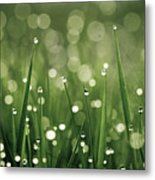 Water Drops On Grass Metal Print by Florence Barreau