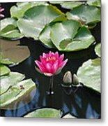 Water Lilies Metal Print by Jennifer Ancker