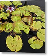 Water Lillies And Pads Metal Print by Forest Alan Lee