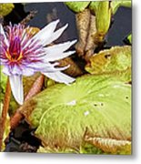 Water Lilly Close Up Metal Print by Forest Alan Lee