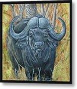 Waterbuffalo Metal Print by Tod Locke