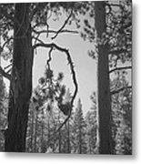We Two Metal Print by Laurie Search
