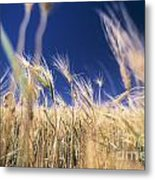 Wheat Field Metal Print by Juan  Silva