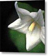 White Balloon Flower-faux Painting Metal Print by  Onyonet  Photo Studios