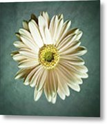 White Daisy Metal Print by Tamyra Ayles