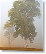 White Gum Dawn Metal Print by Mike  Dawson