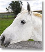 White Horse Metal Print by Elena Elisseeva