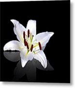 White Lily Metal Print by Jane Rix