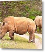 White Rhinoceros Metal Print by Tom Gowanlock