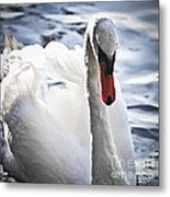 White Swan Metal Print by Elena Elisseeva