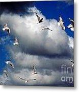 Wind Sailing Seagulls Metal Print by Vicki Ferrari