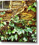 Window And Grapevines Metal Print by HD Connelly
