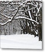 Winter Park With Snow Covered Trees Metal Print by Elena Elisseeva