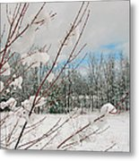 Winter Woods Metal Print by Joann Vitali