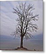 Wintertree Metal Print by Joana Kruse
