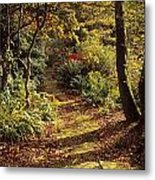 Woodland Path, Mount Stewart, Ards Metal Print by The Irish Image Collection