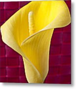 Yellow Calla Lily Red Mat Metal Print by Garry Gay