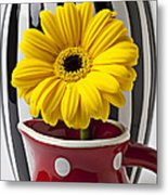 Yellow Mum In Pitcher  Metal Print by Garry Gay