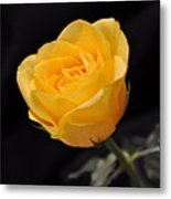 Yellow Rose On Black Background Metal Print by Déco'Style Balexia87