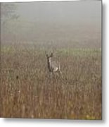Young Buck Metal Print by Charles Warren