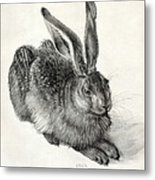 Young Hare, By Durer Metal Print by Sheila Terry