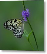 Butterfly On Flower  Metal Print by Sandy Keeton