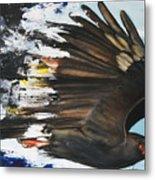 Everglades Snail Kite Metal Print by Anthony Burks Sr