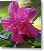 Althea Hibiscus I Metal Print by Patricia Griffin Brett