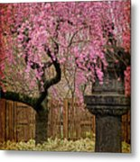 Asian Spring Metal Print by Chris Lord