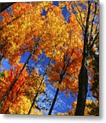 Autumn Forest Metal Print by Elena Elisseeva