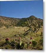 Black Mesa Cacti Metal Print by Charles Warren