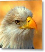 Eagle 10 Metal Print by Marty Koch