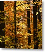 Fall Forest Metal Print by Elena Elisseeva