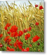 Grain And Poppy Field Metal Print by Elena Elisseeva