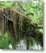 Hall Of Mosses - Hoh Rain Forest Olympic National Park Wa Usa Metal Print by Christine Till