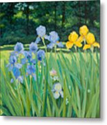 Irises In The Garden Metal Print by Betty McGlamery