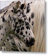 Knabstrupper Foal Metal Print by Michael Mogensen