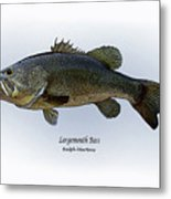 Largemouth Bass Metal Print by Ralph Martens