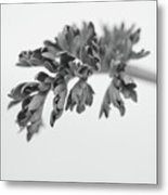Leaf Metal Print by Gabriela Insuratelu