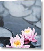 Lotus Blossoms Metal Print by Elena Elisseeva