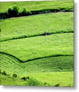 Mowing Hay  Metal Print by Thomas R Fletcher