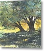 Old Oaks Metal Print by Patrick Grills